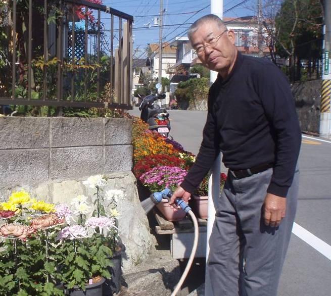 菊で通行人や散歩の方々を楽しませてくださる元気!なシニア