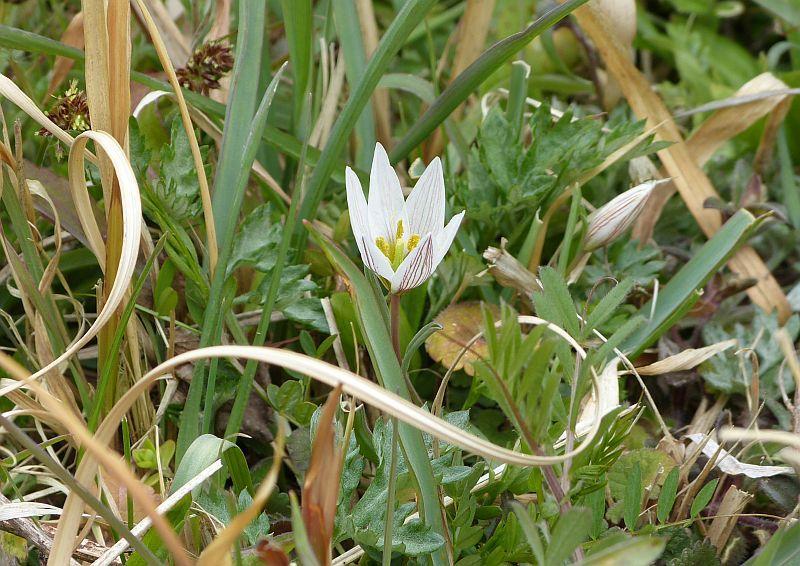 伏尾台でみられる 春の花たち2