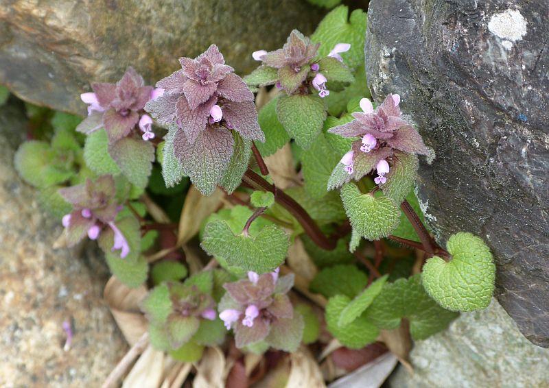 伏尾台でみられる 春の花たち1