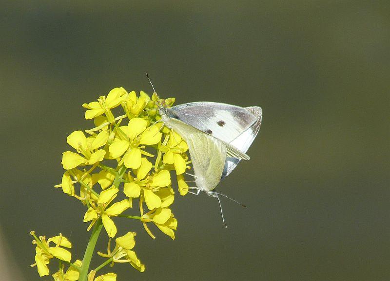 伏尾台でみられる 春の虫たち